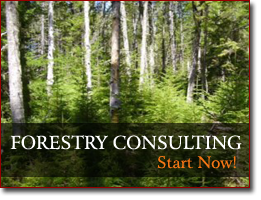 Forestry Consulting